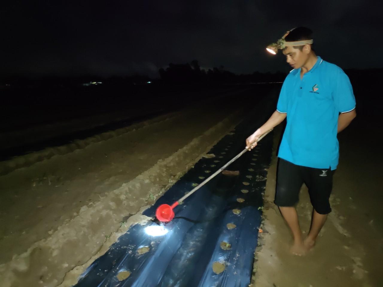 Nắng nóng đỉnh điểm: Nông dân Nghệ An thắp đèn thu hoạch dưa - Ảnh 5.