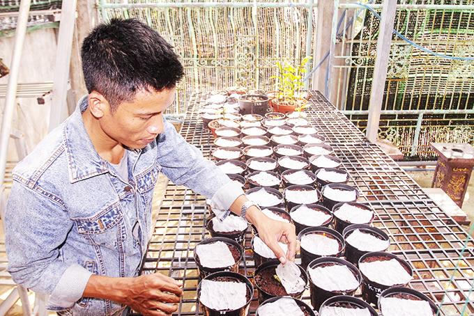 """Hoa lan đột biến: Một """"nông dân tay"""" ngang tỉnh Khánh Hòa bỏ lương 40-50 triệu về ươm kie lan đột biến gì? - Ảnh 2."""
