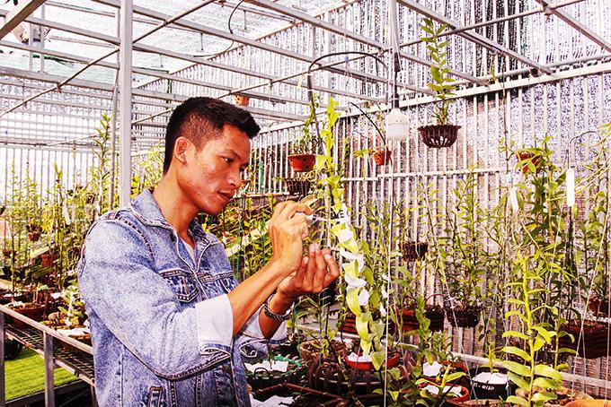"""Hoa lan đột biến: Một """"nông dân tay"""" ngang tỉnh Khánh Hòa bỏ lương 40-50 triệu về ươm kie lan đột biến gì? - Ảnh 5."""