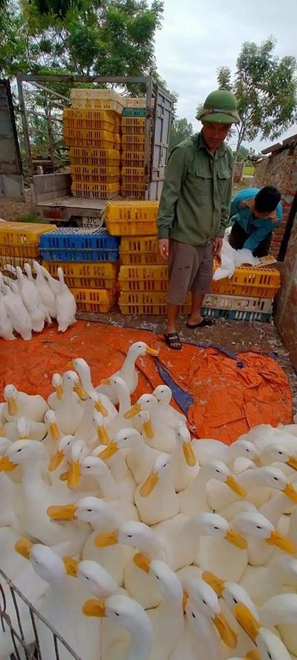 Giá gia cầm hôm nay 6/5: Giá gà, vịt diễn biến khó lường,   vịt thải đi Trung Quốc khan hàng - Ảnh 1.