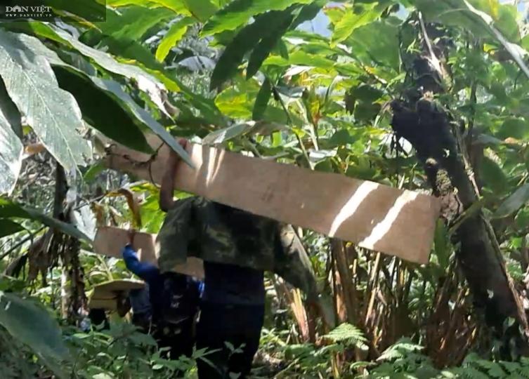 Phá rừng pơ mu VQG Hoàng Liên: Trách nhiệm thuộc VQG Hoàng liên và UBND tỉnh Lào Cai - Ảnh 2.
