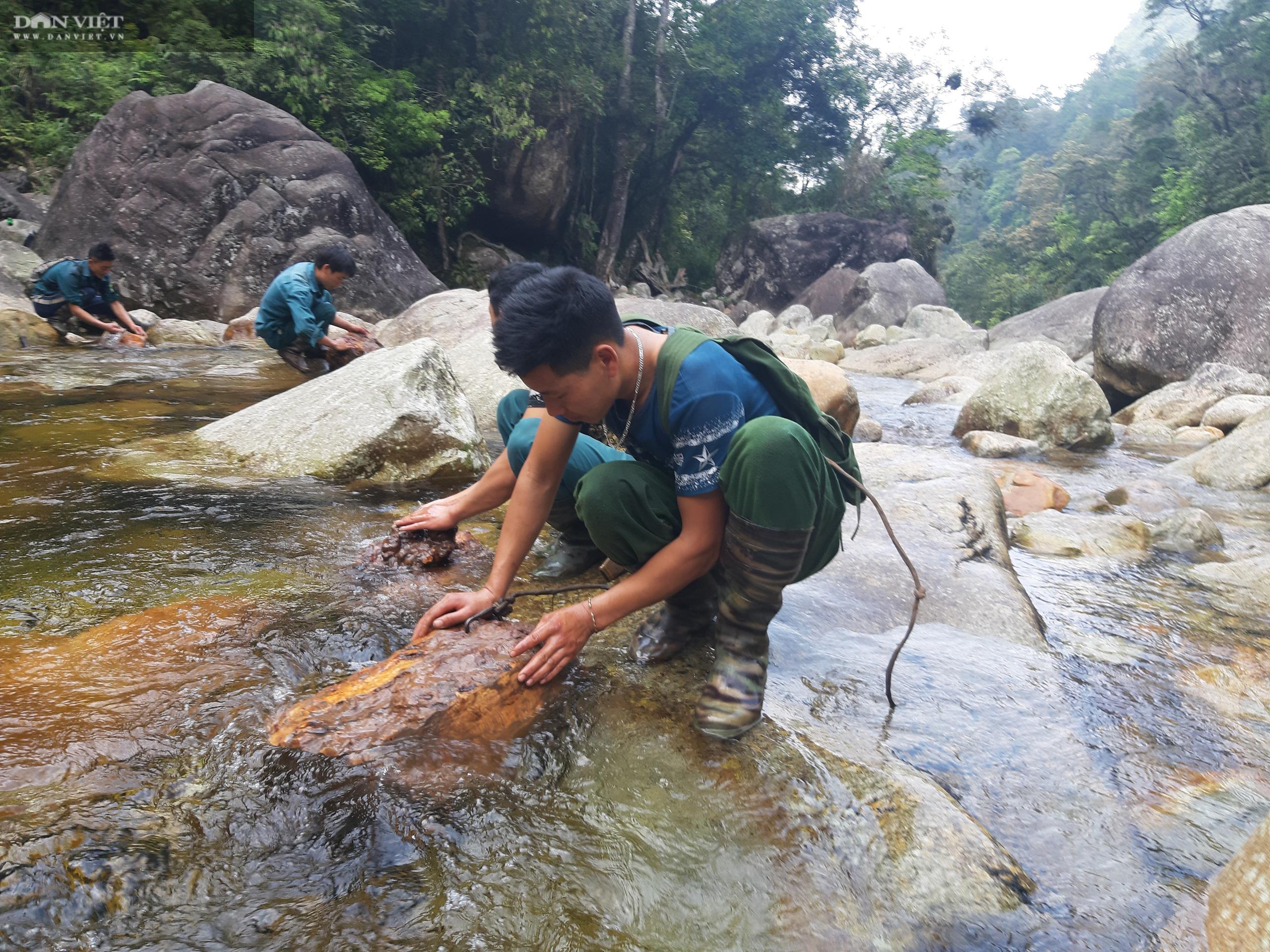 Phá rừng pơ mu VQG Hoàng Liên: Trách nhiệm thuộc VQG Hoàng liên và UBND tỉnh Lào Cai - Ảnh 4.
