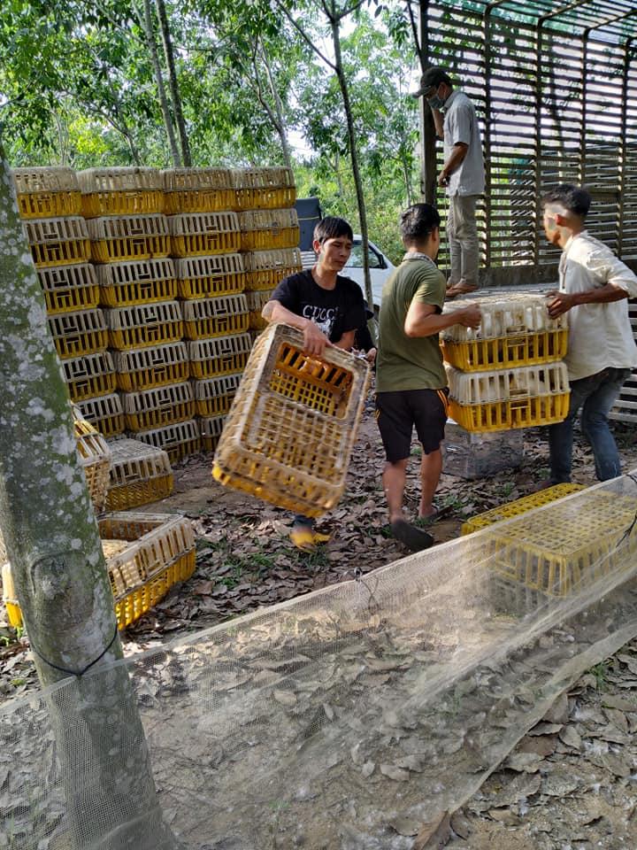 Giá gia cầm hôm nay 7/5: Người nuôi vịt sạch kêu trời, ít ai ngờ mặt hàng gia cầm này lại xuất khẩu nhiều - Ảnh 1.