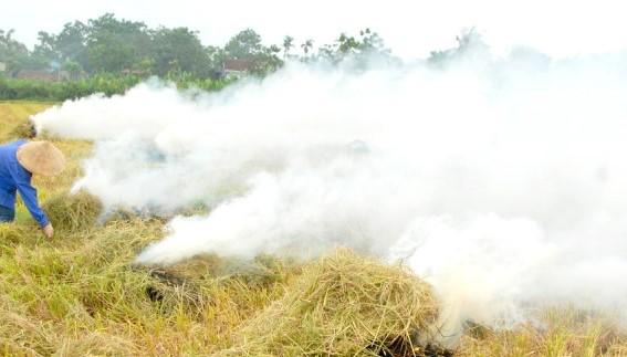 Chủ tịch TT-Huế yêu cầu lập đường dây nóng để xử lý tình trạng đốt rơm rạ sau thu hoạch  - Ảnh 1.