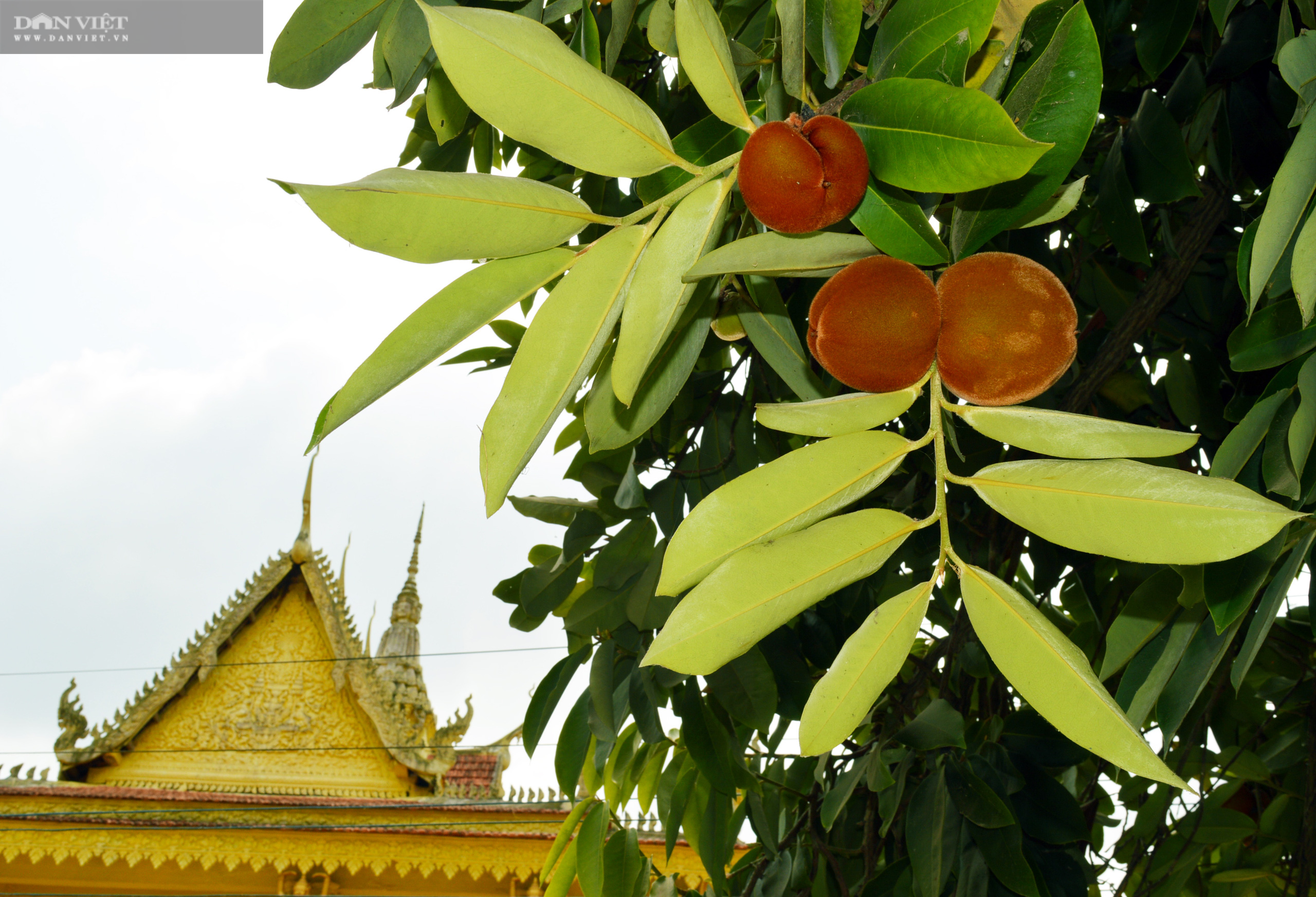 Sóc Trăng: Huyền bí ngôi chùa Khmer hơn 500 tuổi  - Ảnh 7.