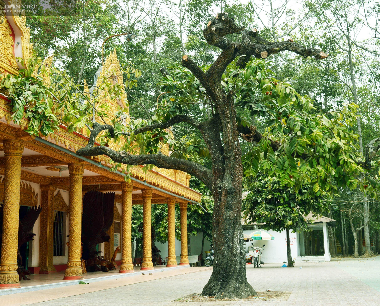 Sóc Trăng: Huyền bí ngôi chùa Khmer hơn 500 tuổi  - Ảnh 9.