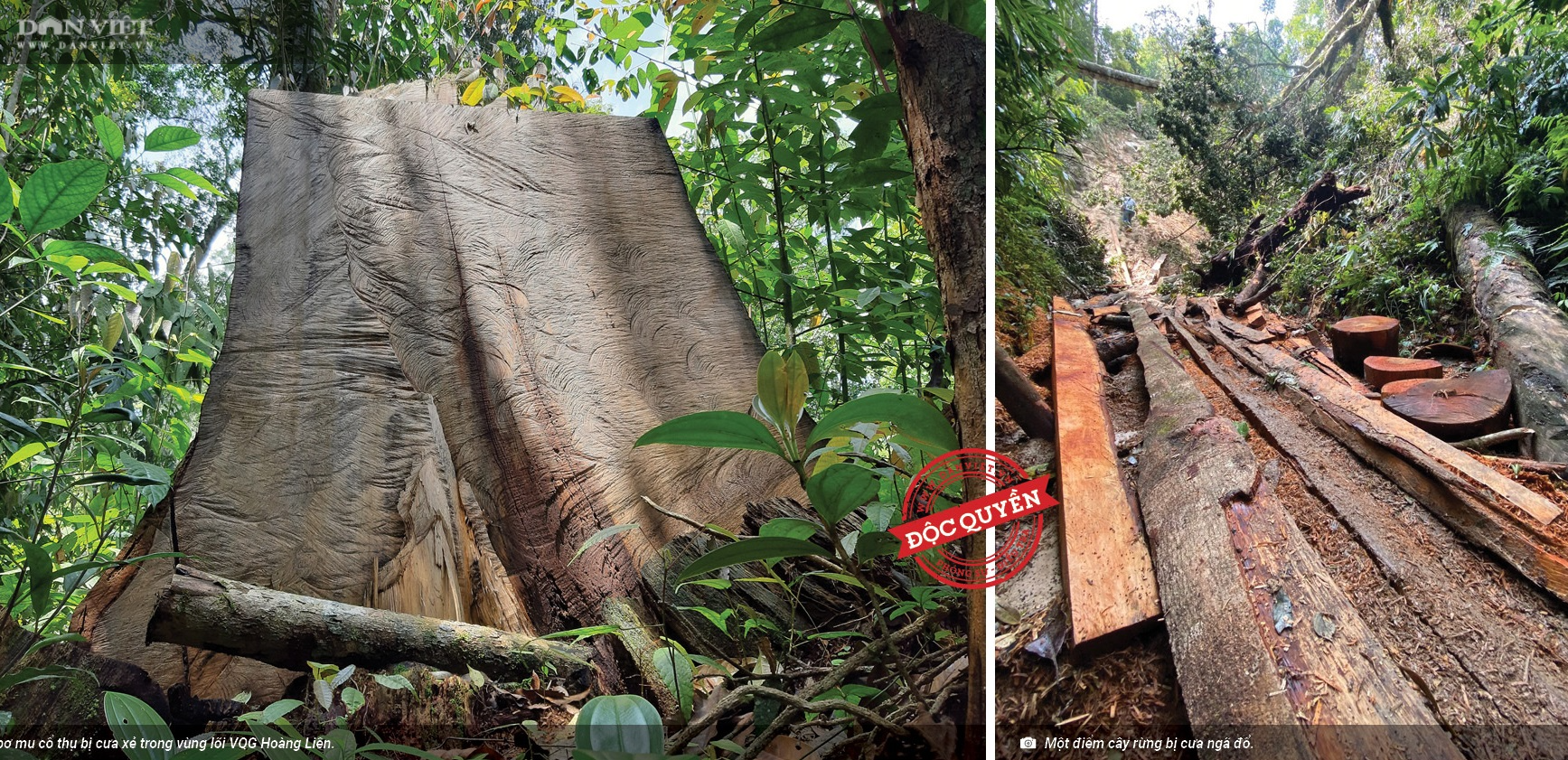 UBND tỉnh chỉ đạo Công an vào cuộc điều tra phá rừng Vườn quốc gia Hoàng Liên - Ảnh 2.