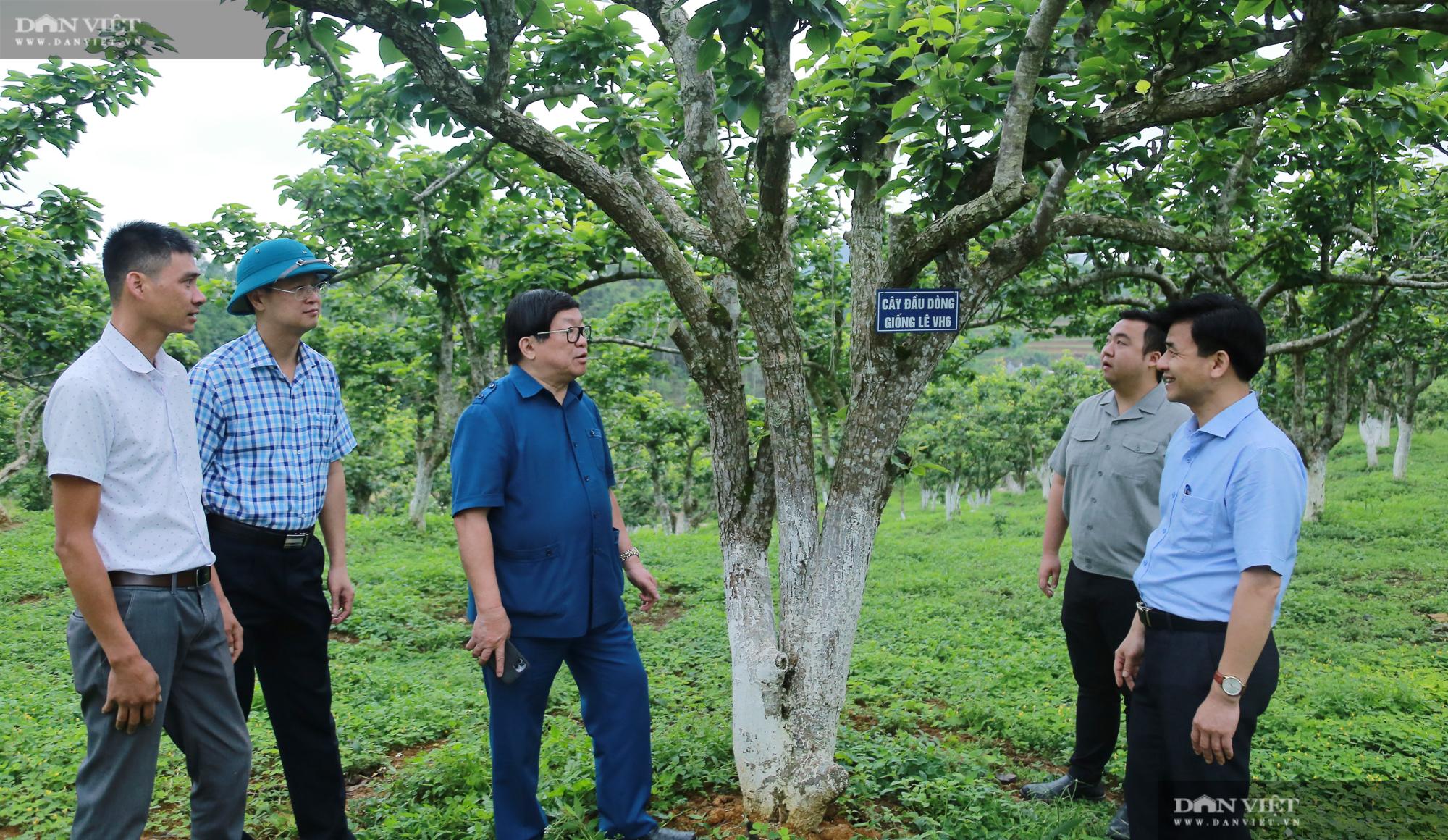 Chủ tịch Hội Nông dân Việt Nam thăm trại nghiên cứu cây ăn quả đặc sản ở biên giới - Ảnh 1.