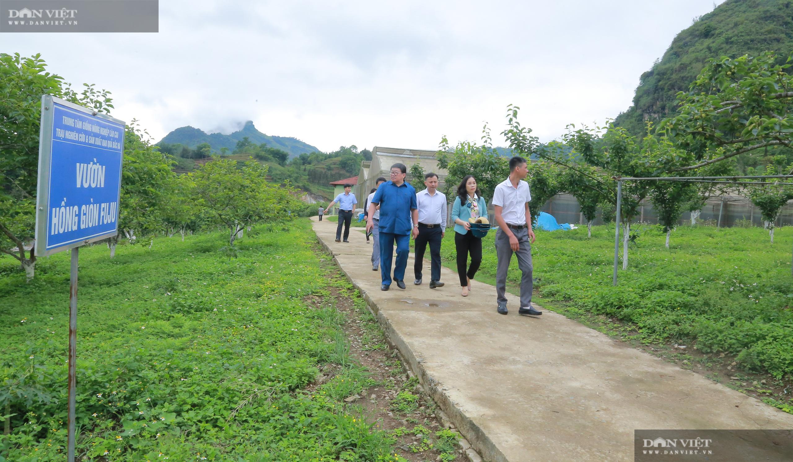 Chủ tịch Hội Nông dân Việt Nam thăm trại nghiên cứu cây ăn quả đặc sản ở biên giới - Ảnh 2.