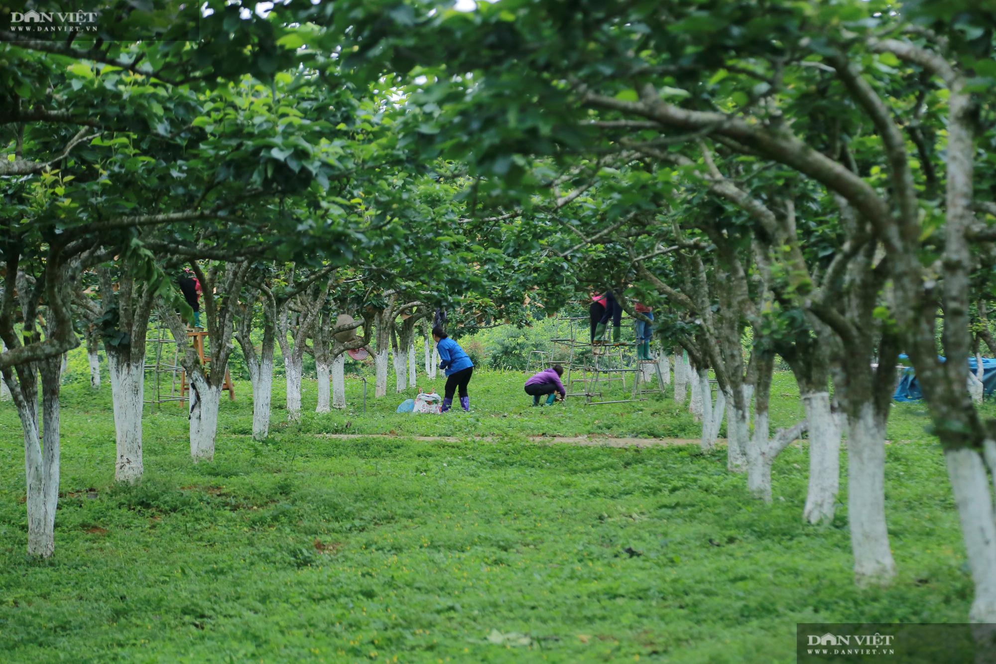 Chủ tịch Hội Nông dân Việt Nam thăm trại nghiên cứu cây ăn quả đặc sản ở biên giới - Ảnh 3.
