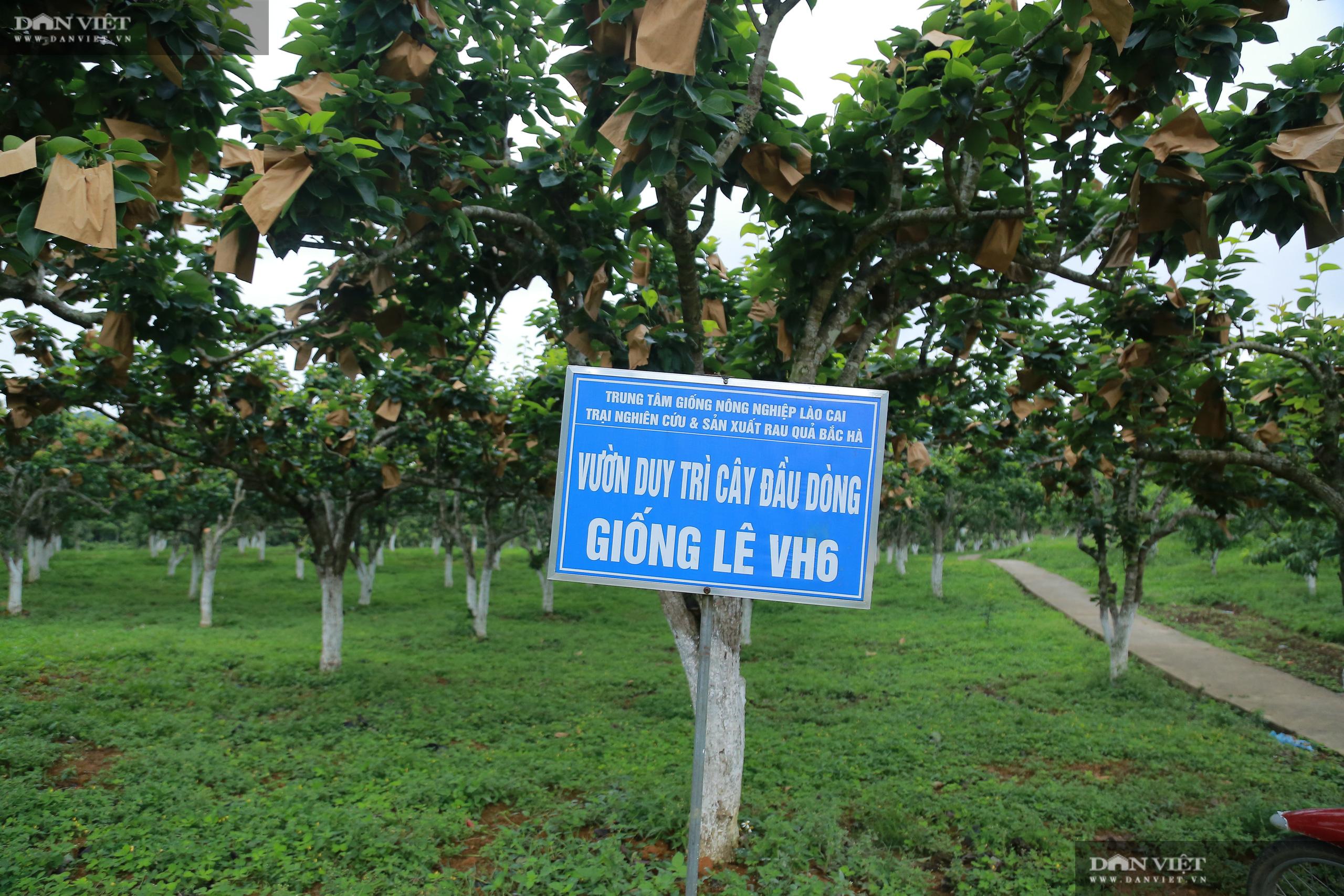 Chủ tịch Hội Nông dân Việt Nam thăm trại nghiên cứu cây ăn quả đặc sản ở biên giới - Ảnh 4.