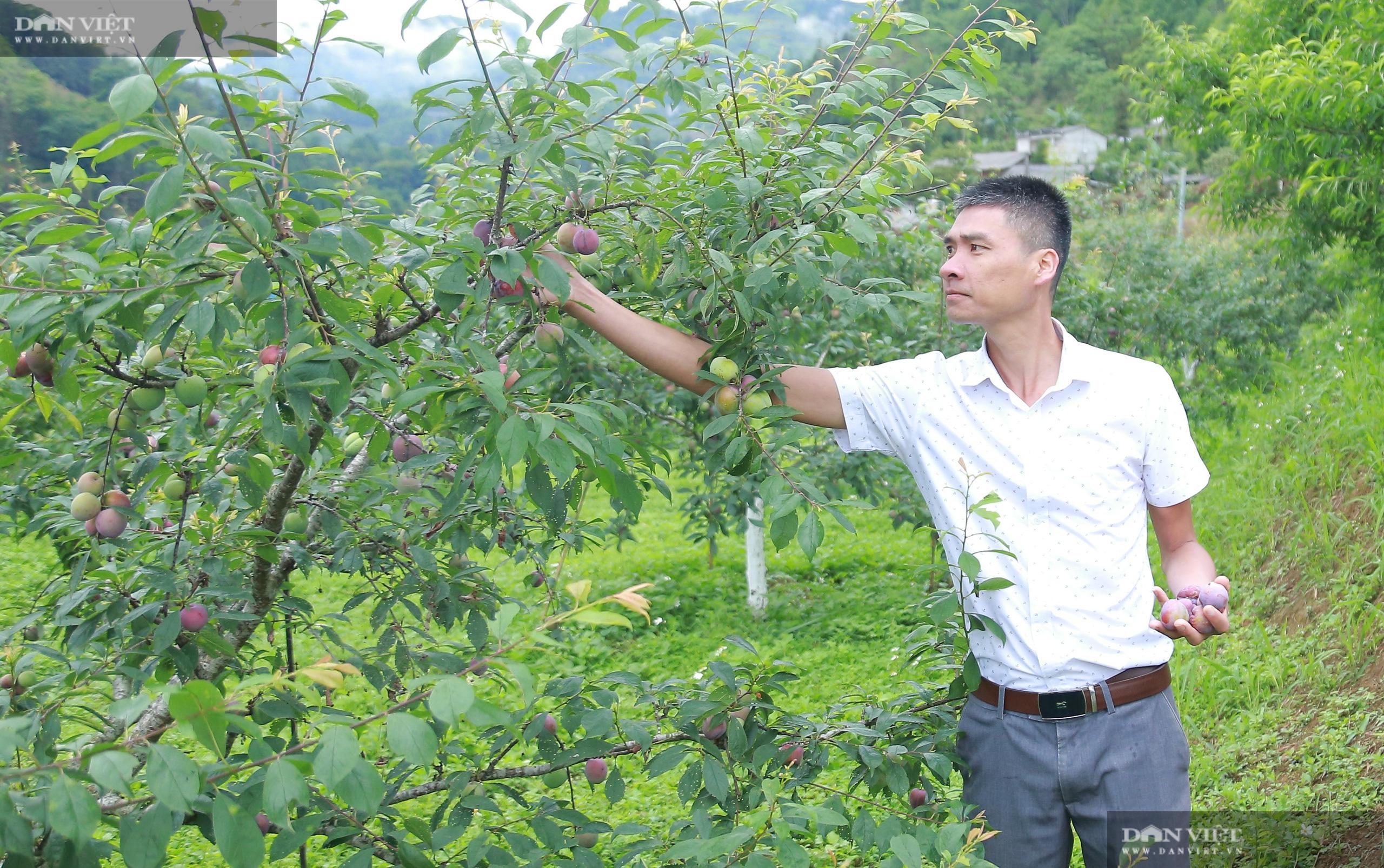 Chủ tịch Hội Nông dân Việt Nam thăm trại nghiên cứu cây ăn quả đặc sản ở biên giới - Ảnh 7.