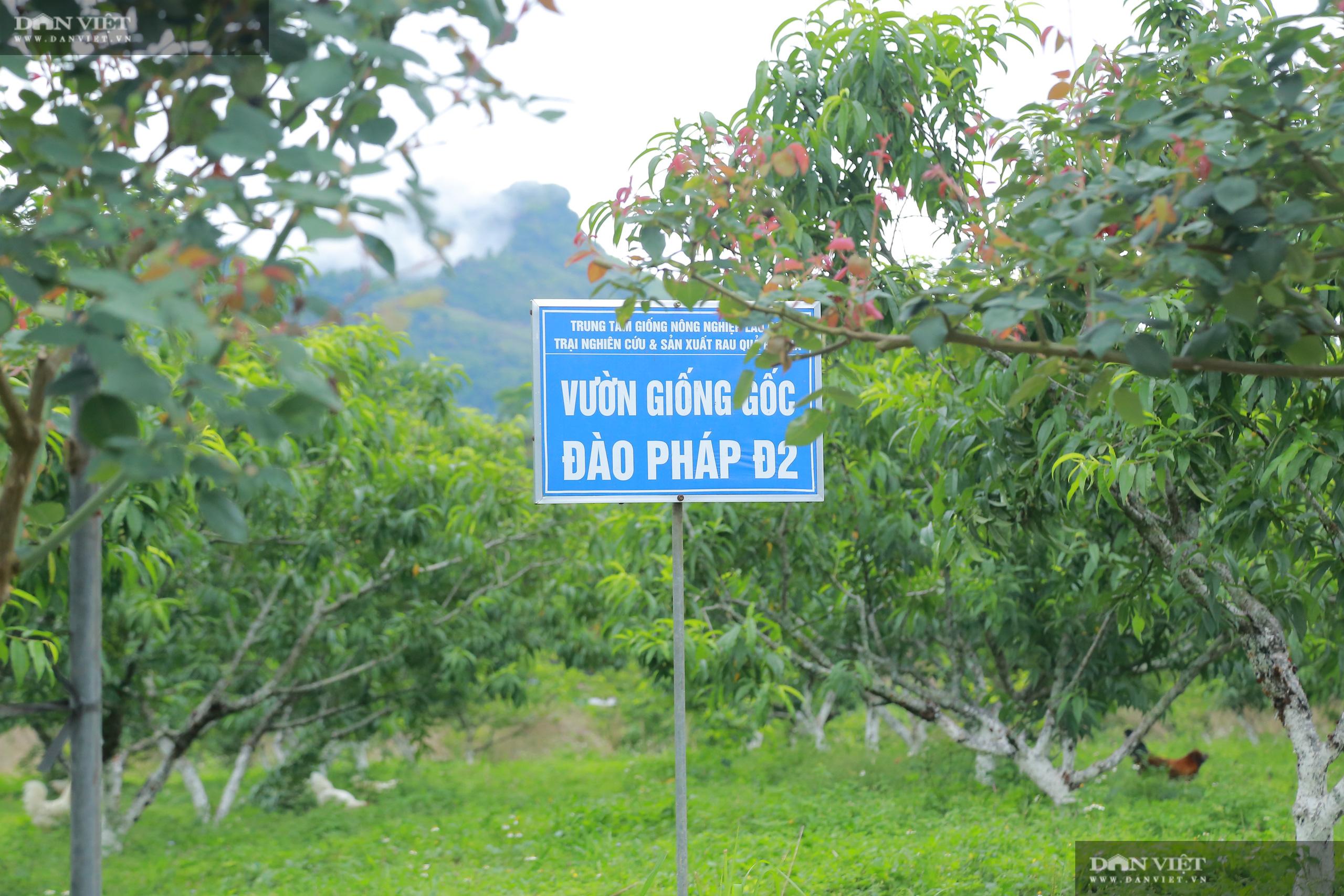 Chủ tịch Hội Nông dân Việt Nam thăm trại nghiên cứu cây ăn quả đặc sản ở biên giới - Ảnh 8.
