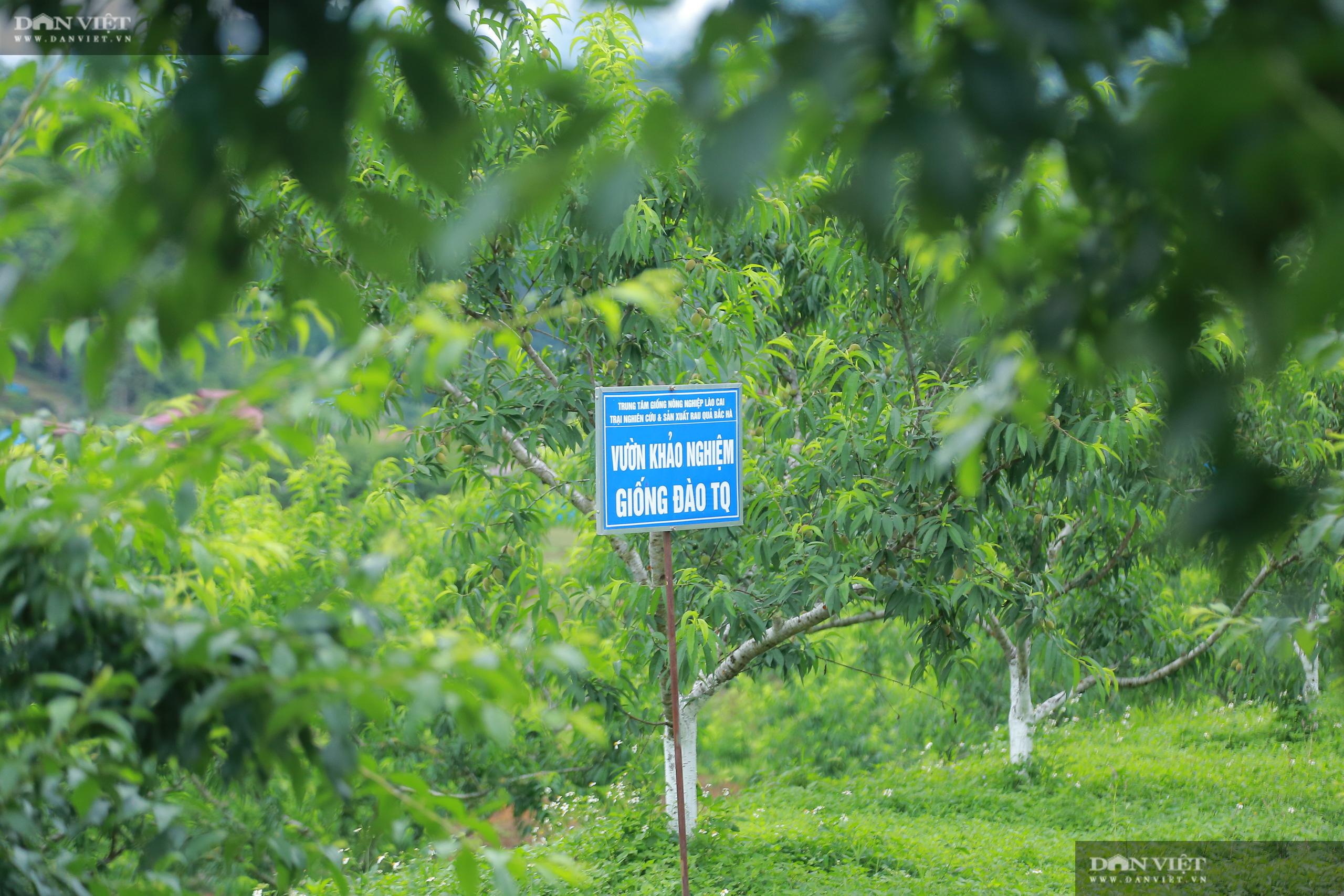 Chủ tịch Hội Nông dân Việt Nam thăm trại nghiên cứu cây ăn quả đặc sản ở biên giới - Ảnh 9.
