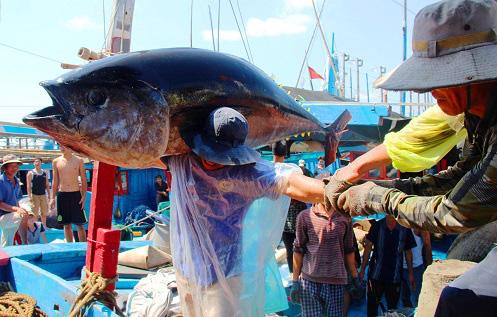 Bình Định bất ngờ muốn dừng tham gia dự án Cảng cá Tam Quan có vốn 540 tỷ đồng - Ảnh 4.