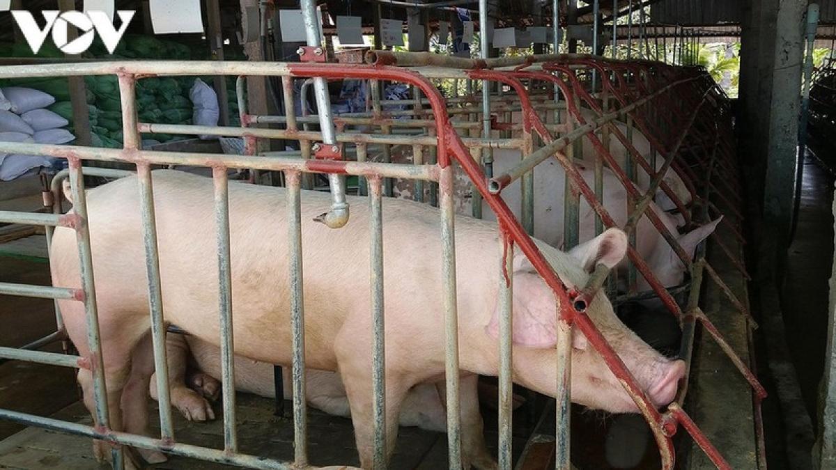 Giá lợn hơi trong nước tiếp tục giảm, xuống mức thấp nhất trong 1 năm qua - Ảnh 1.