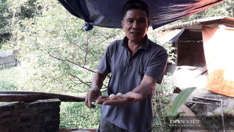Thái Nguyên: Nuôi con chỉ ăn hè, ngủ đông vài năm mới thu hoạch ông nông dân đổi đời mua ô tô - Ảnh 1.