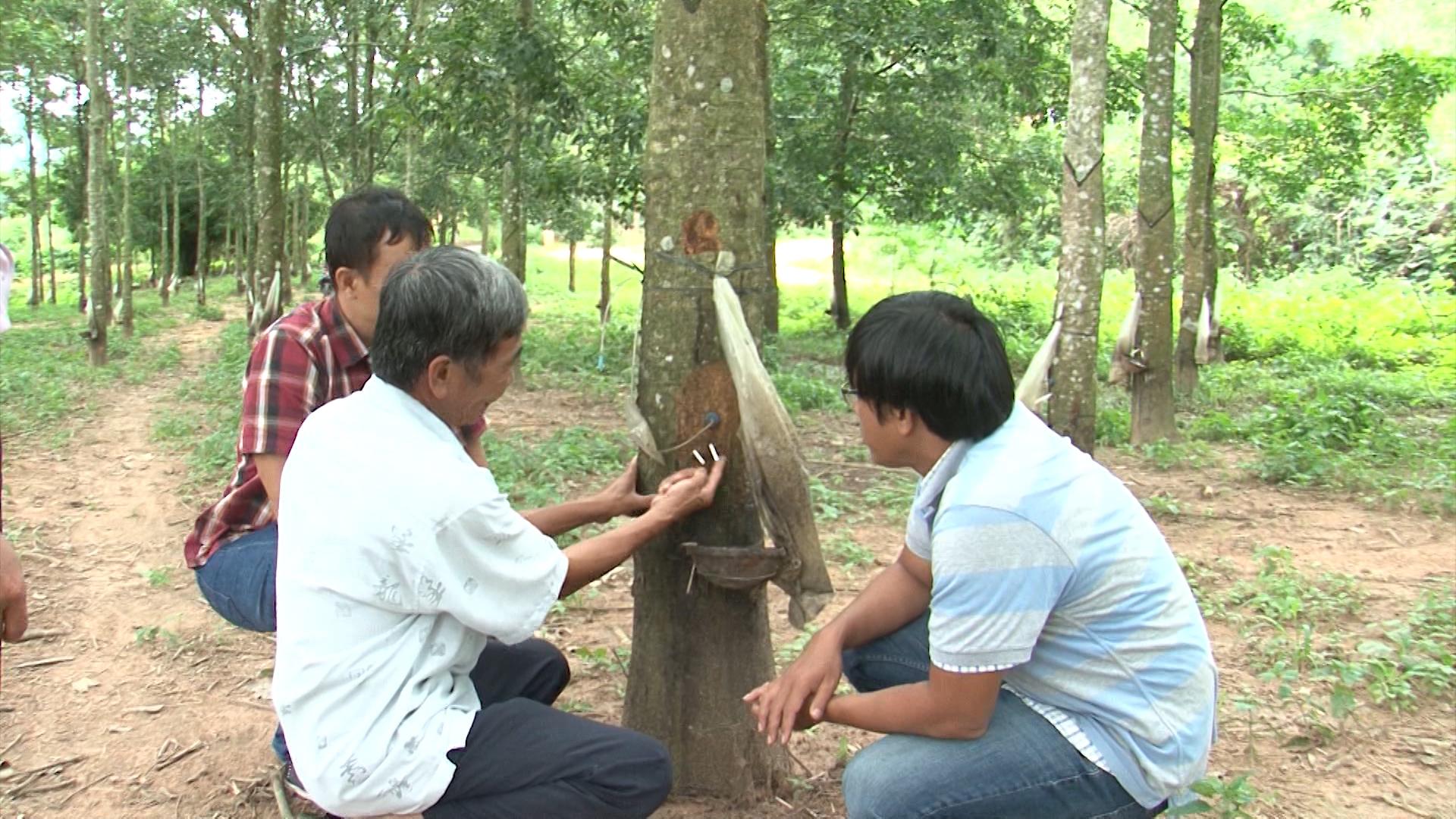 Trung Quốc nhập lượng nông sản khổng lồ này của Việt Nam về làm lốp rồi bán sang Việt Nam 4.000 ô tô - Ảnh 1.