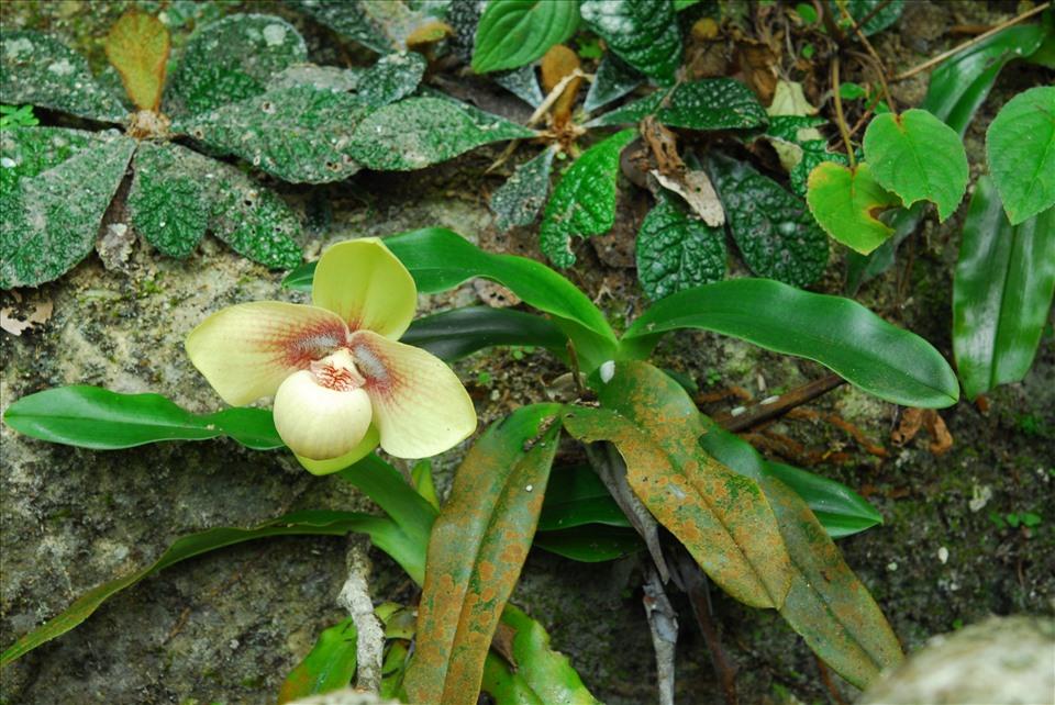 Lãng tử 12 năm liền lang thang trong rừng săn ảnh hoa lan, suýt chết vì lan - Ảnh 11.