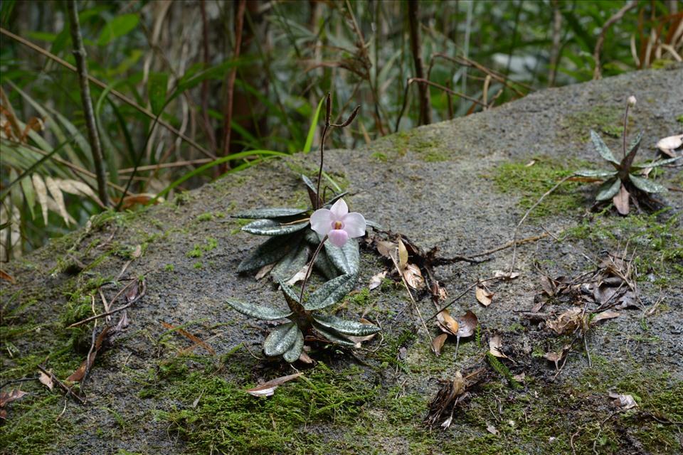 Lãng tử 12 năm liền lang thang trong rừng săn ảnh hoa lan, suýt chết vì lan - Ảnh 12.