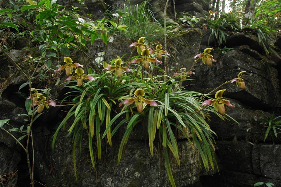 Lãng tử 12 năm liền lang thang trong rừng săn ảnh hoa lan, suýt chết vì lan - Ảnh 9.