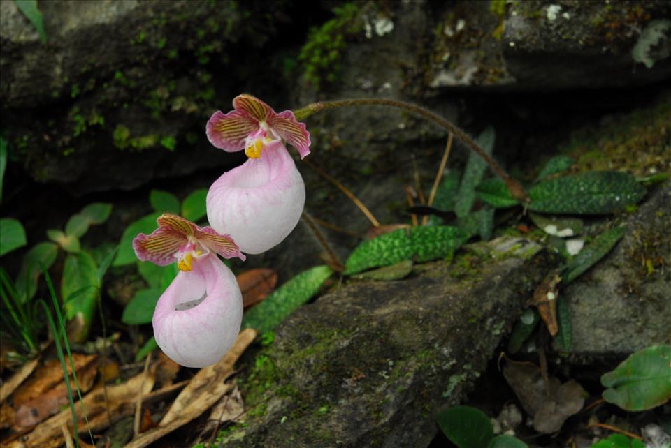 Lãng tử 12 năm liền lang thang trong rừng săn ảnh hoa lan, suýt chết vì lan - Ảnh 10.