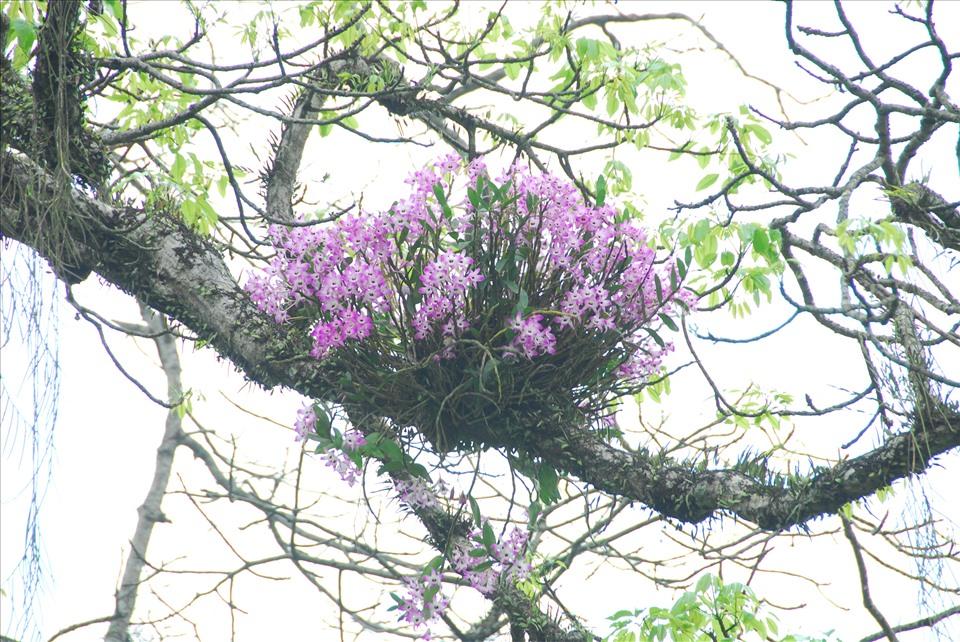 Lãng tử 12 năm liền lang thang trong rừng săn ảnh hoa lan, suýt chết vì lan - Ảnh 5.