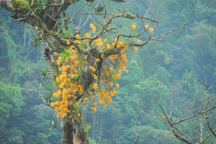 Lãng tử 12 năm liền lang thang trong rừng săn ảnh hoa lan, suýt chết vì lan - Ảnh 1.