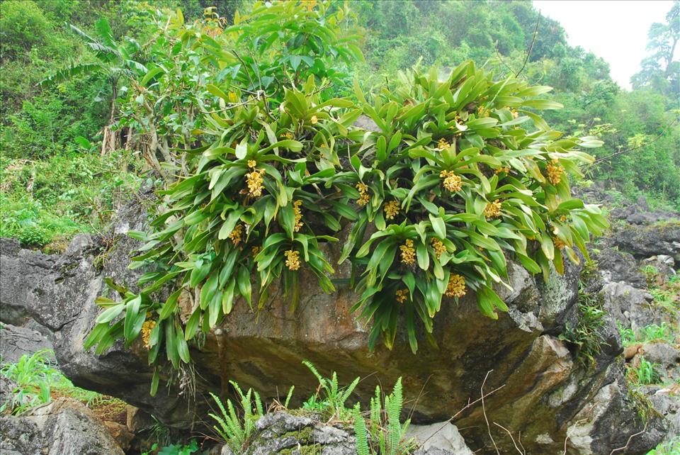 Lãng tử 12 năm liền lang thang trong rừng săn ảnh hoa lan, suýt chết vì lan - Ảnh 4.