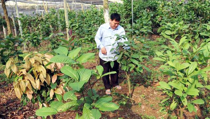 Vĩnh Phúc: Lên núi tìm loài cây quý mang về trồng trong vườn, bất ngờ hái thứ hoa bán đắt như vàng - Ảnh 1.