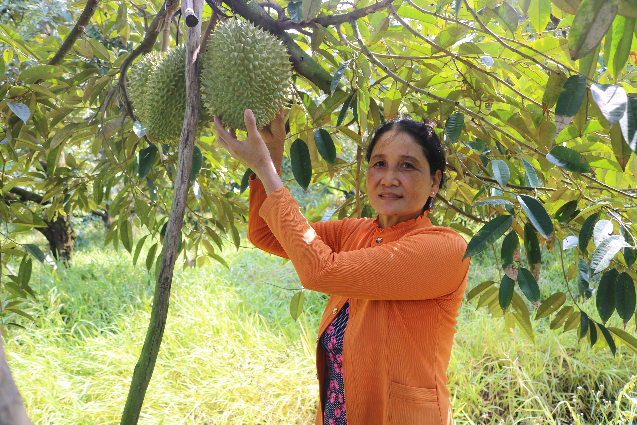 Tiền Giang: Tại sao nhiều loại trái cây rớt giá thảm, giá loại trái cây này vẫn ở mức cao, thương lái lùng mua? - Ảnh 1.