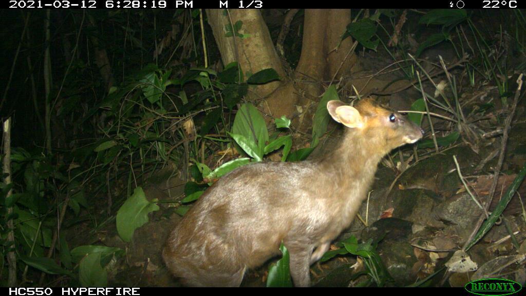 TT-Huế: Vừa phát hiện ở Khu bảo tồn thiên nhiên Phong Điền loài mang quý hiếm tưởng như đã tuyệt chủng - Ảnh 1.