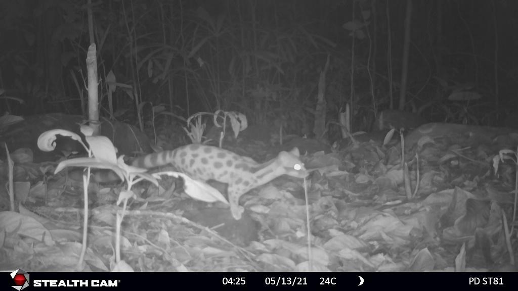 TT-Huế: Vừa phát hiện ở Khu bảo tồn thiên nhiên Phong Điền loài mang quý hiếm tưởng như đã tuyệt chủng - Ảnh 9.