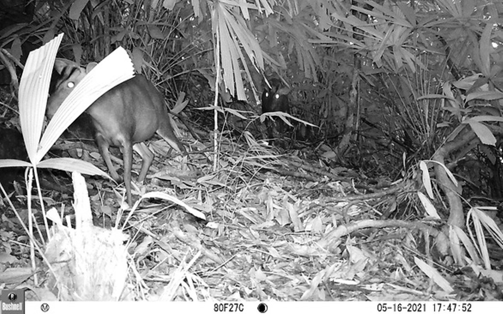 TT-Huế: Vừa phát hiện ở Khu bảo tồn thiên nhiên Phong Điền loài mang quý hiếm tưởng như đã tuyệt chủng - Ảnh 2.