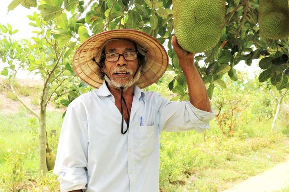 Quảng Nam: Một ông nông dân trồng vườn 10 loại cây đặc sản, trong đó có quả bưởi to như quả mít nặng 5kg - Ảnh 1.