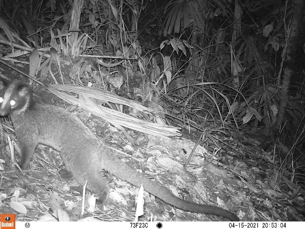 TT-Huế: Vừa phát hiện ở Khu bảo tồn thiên nhiên Phong Điền loài mang quý hiếm tưởng như đã tuyệt chủng - Ảnh 5.