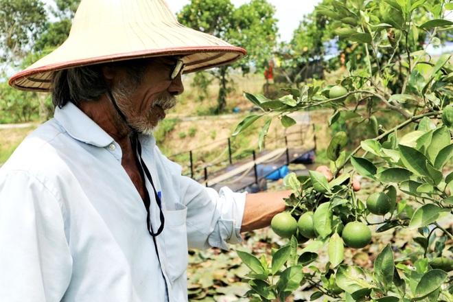 Quảng Nam: Một ông nông dân trồng vườn 10 loại cây đặc sản, trong đó có quả bưởi to như quả mít nặng 5kg - Ảnh 5.