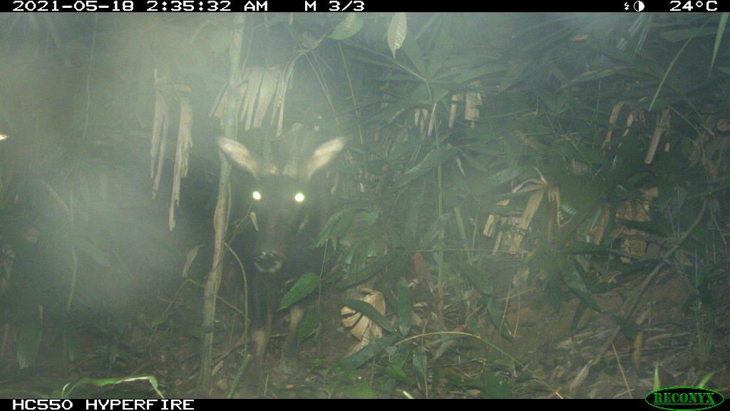 TT-Huế: Vừa phát hiện ở Khu bảo tồn thiên nhiên Phong Điền loài mang quý hiếm tưởng như đã tuyệt chủng - Ảnh 6.