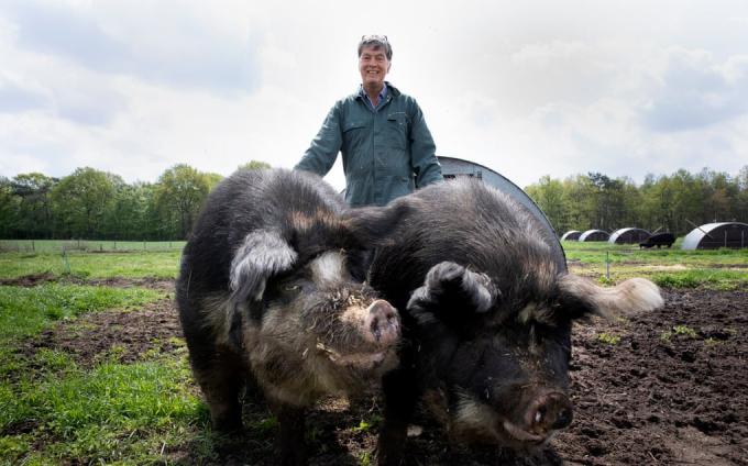 """Vị bác sĩ thú y Hà Lan và ước mơ """"lợn quyền"""" - Ảnh 1."""