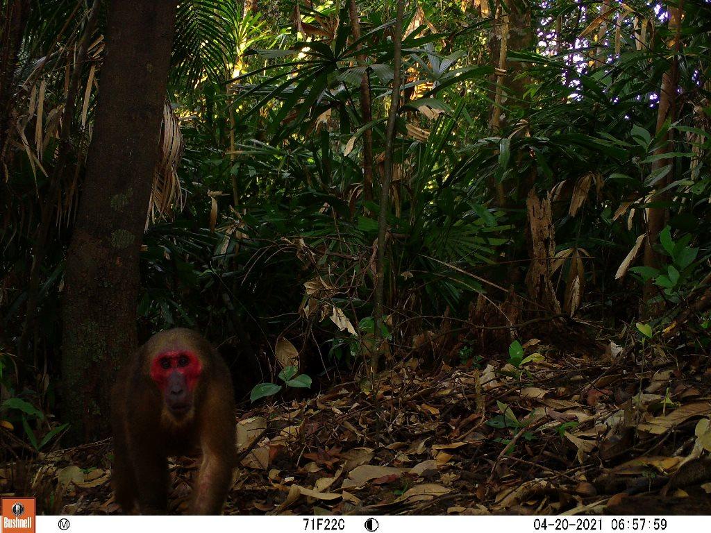 TT-Huế: Vừa phát hiện ở Khu bảo tồn thiên nhiên Phong Điền loài mang quý hiếm tưởng như đã tuyệt chủng - Ảnh 7.