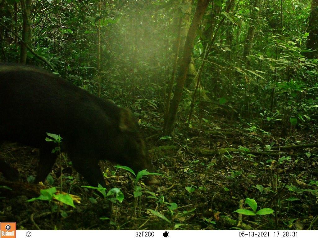 TT-Huế: Vừa phát hiện ở Khu bảo tồn thiên nhiên Phong Điền loài mang quý hiếm tưởng như đã tuyệt chủng - Ảnh 8.
