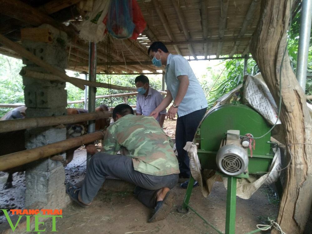 Sơn La: Ngăn chặn bệnh viêm da nổi cục ở trâu, bò - Ảnh 4.