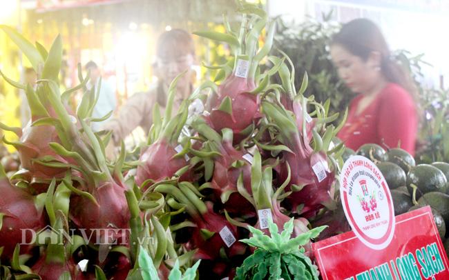 Giá thanh long Bình Thuận đang giảm thấp. Trần Khánh