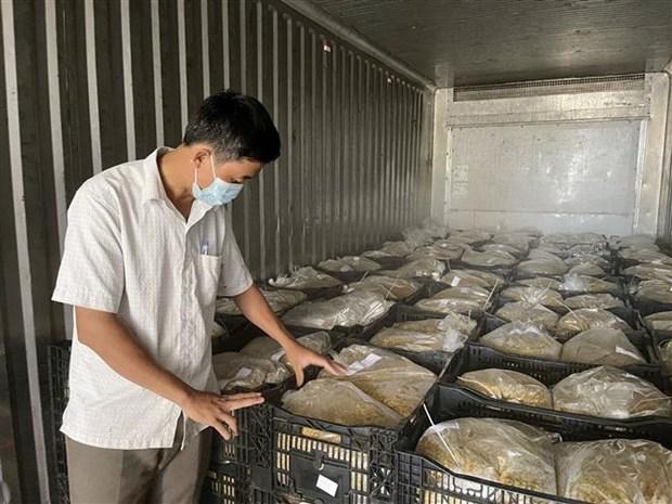 Quảng Trị: Vùng đất nóng trồng thứ cây ra trái ăn mát để làm gì mà bán loại nhất giá 35.000-38.000 đồng/kg? - Ảnh 3.