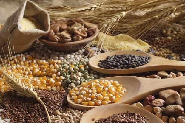 FAO: Chi phí nhập khẩu lương thực toàn cầu sẽ tăng lên mức kỷ lục  - Ảnh 1.