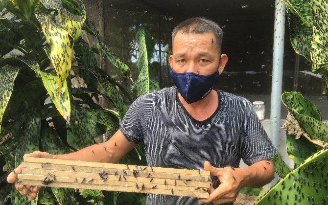 Nuôi con gì chuyên ăn đồ vứt đi, anh nông dân tỉnh Bà Rịa-Vũng Tàu khá giả hẳn lên?
