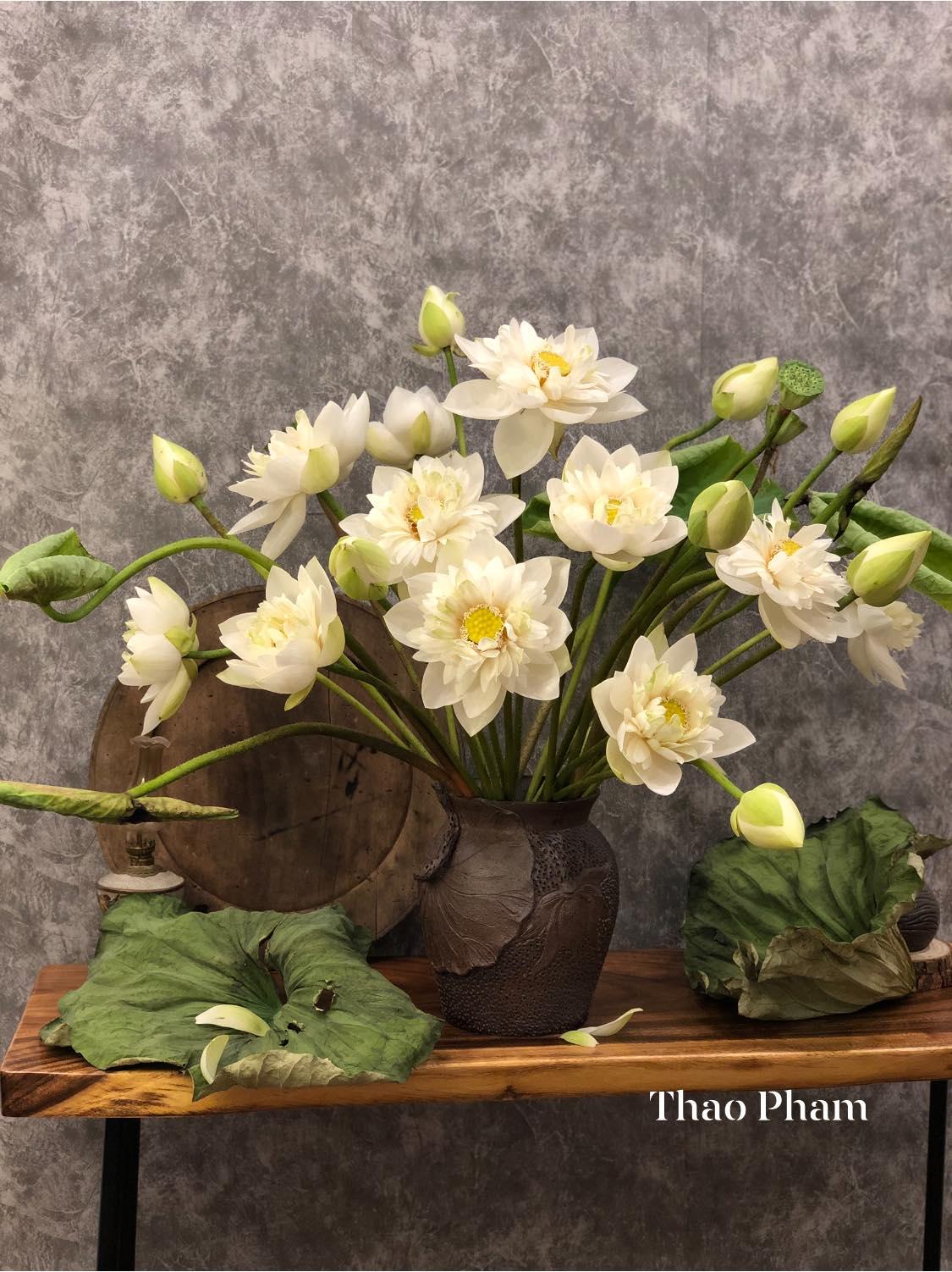 Hoa sen - Ảnh 3.
