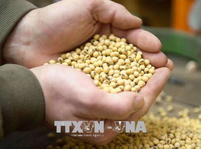 Nông sản tuần qua: Giá gạo Việt Nam giảm nhẹ, gạo Thái Lan còn được chào bán thấp hơn - Ảnh 1.