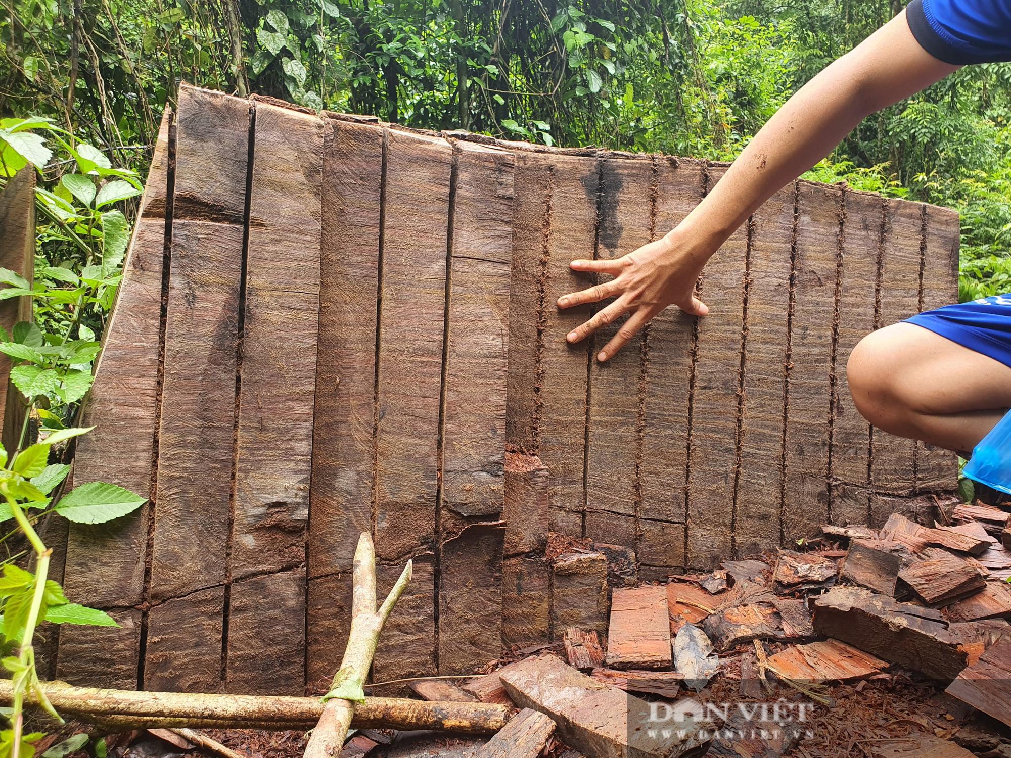 Video: Cận cảnh rừng nghiến cổ thụ VQG Du Già bị tàn phá - Ảnh 4.
