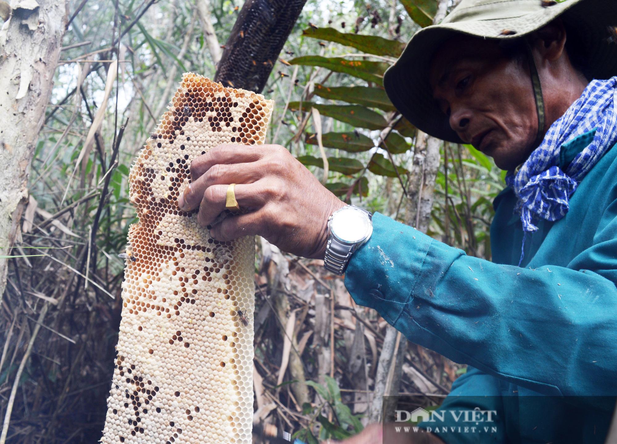 Điểm qua những món đặc sản từ nhộng ong, nhìn thì sợ nhưng ăn thì ghiền - Ảnh 4.